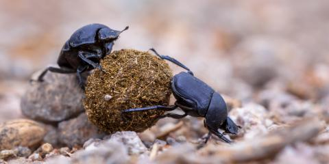 4 Interesting Facts That May Surprise You About Beetles Advanced Termite Pest Control Nearsay