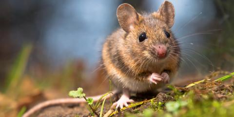 3 Ways to Keep Rodents Out of Your House, Newport, Ohio