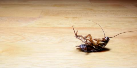 Why You Need Pest Control Companies in Winter, Brookhaven, New York