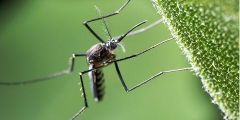 Pest Control Service Explains How You Can Keep Mosquitos at Bay, Elizabethtown, Kentucky