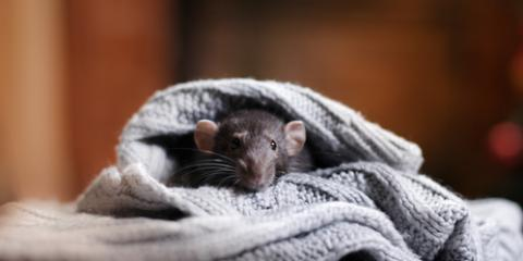 Pest Control Company Shares 3 Critters to Look for in the Winter, Miami, Ohio