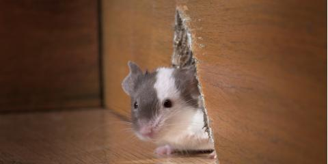3 Signs of Rodents in Your Home, Leitchfield, Kentucky