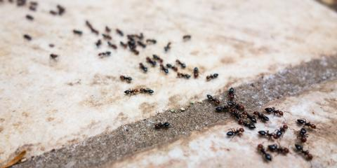 3 Tips to Keep Ants Out of Your Home, Cookeville, Tennessee