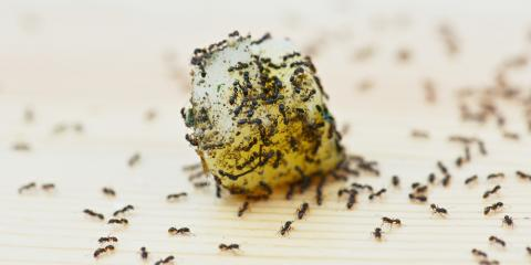 5 Simple Pest Control Tips From Alabama's Trusted
