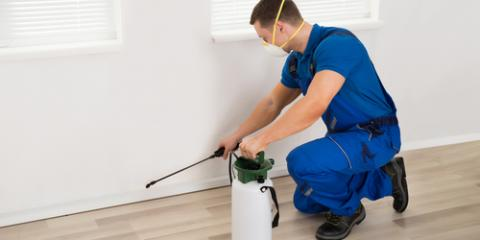3 Simple Pest Control Tips to Help Get Rid of an Ant Infestation, Newark, Ohio