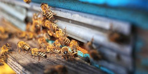 Call Pest Control Pros for These 3 Fall Pests, Statesboro, Georgia