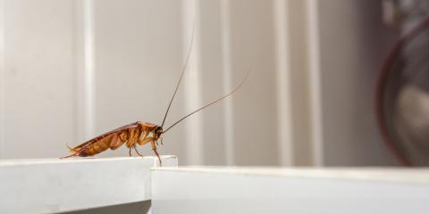 Georgia Pest Control Service Explains How to Get Rid of Roaches, Savannah, Georgia