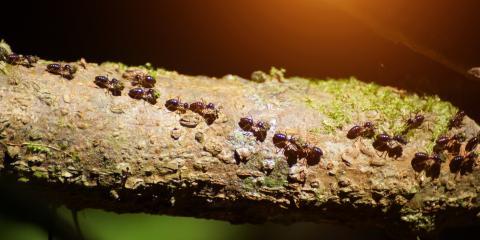 5 Signs You Need Pest Control Services for Termites, Statesboro, Georgia