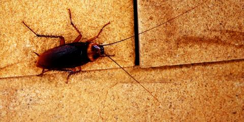 Pest Control Experts Explain How to Prevent Cockroach Problems at Home, Rochester, New York