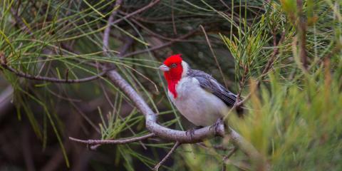 3 Tips to Keep Birds Away From the Yard, Wahiawa, Hawaii