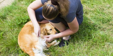 Top 3 Signs Your Dog Has Fleas, Warner Robins, Georgia
