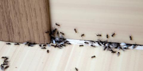 Don't Let Pests Take Over Your Property: 5 Pest Control Tips, Mooresville, North Carolina