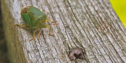 3 Tips to Prevent Stink Bug Infestations, Trenton, Ohio