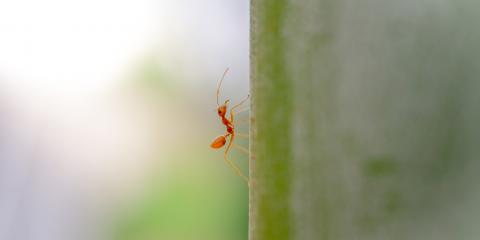 3 Tips for Ant Removal & Prevention, St. Louis, Missouri