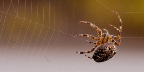 3 Ways to Identify Spiders in Your Home From Pest Control Experts, St. Louis, Missouri