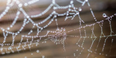 What Are Some Pest Extermination Tips for Staying Spider-Free This Winter?, 2, Maryland