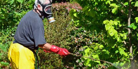 3 Important Questions to Ask a Pest Exterminator, ,