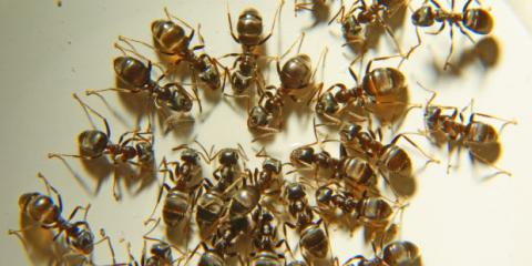 3 Spring Pest Control Tips From Madison's Premier Pest Exterminator, Fitchburg, Wisconsin