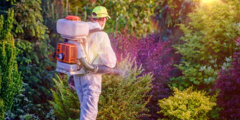 3 Reasons to Leave Pest Control to the Professionals, Wahiawa, Hawaii