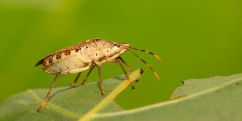 3 Pest Management Tips for Dealing With Stink Bugs, Lexington-Fayette, Kentucky