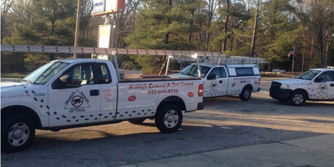 Why You Should Hire a Pest Control Company Before Buying a Home, Swift Creek, North Carolina