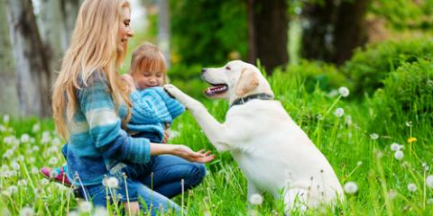 3 Pest Management Tips to Keep Your Pets Safe from Pests, Koolaupoko, Hawaii