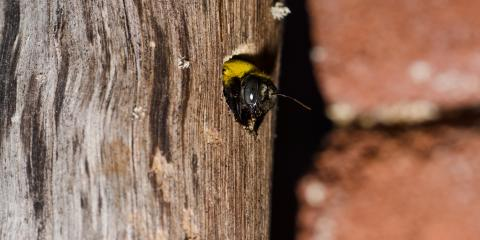 How to Recognize a Carpenter Bee Infestation, Maineville, Ohio