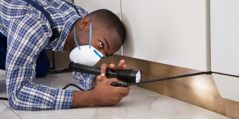 5 Reasons to Let Professionals Handle Your Rodent Problem, Mooresville, North Carolina