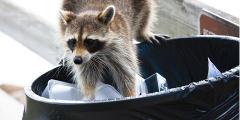 Pest Removal Tips: How to Repel 3 Types of Wildlife From Your Home, Russellville, Arkansas