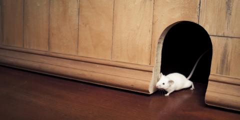 3 Signs You Have Mice in Your Home, Houston, Texas