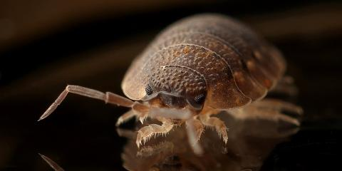 Can an exterminator eliminate bed bugs?, Mobile, Alabama