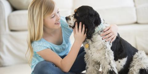 Pet Owner? 3 Tips for Keeping Unwanted Pests Away, New Braunfels, Texas