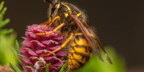 What's the Difference Between Wasps & Hornets?, Three Sisters Mountain, Georgia