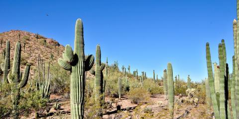 Pest Control 101: Pests That Thrive During the Summer Months, Lake Havasu City, Arizona