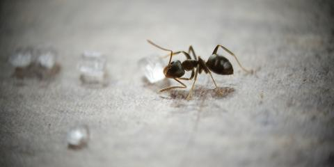 Pest Control 101: Why You Should Hire a Professional to Remove Ants , Atlantic, Iowa