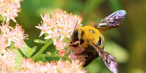 3 Tips For Deterring Bees & Wasps in Summer, 10, Tennessee