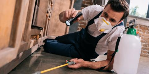 What to Do Now to Keep Your Home Pest-Free This Spring, Enterprise, Alabama
