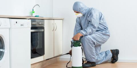 Pros & Cons of DIY Vs. Professional Pest Control, North Haven, Connecticut