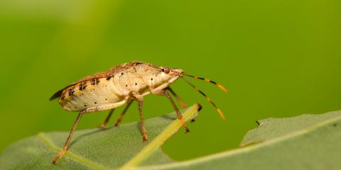Pest Control Company Answers 4 FAQs About Stink Bugs, Roxbury, New Jersey