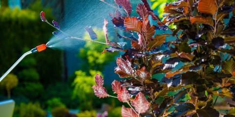 3 Pest Control Tips for Your Property, Koolaupoko, Hawaii
