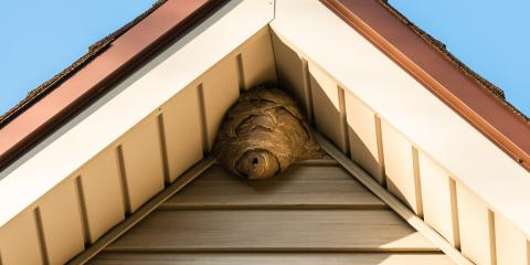How to Identify if You Have Wasps or Bees, Port Orchard, Washington