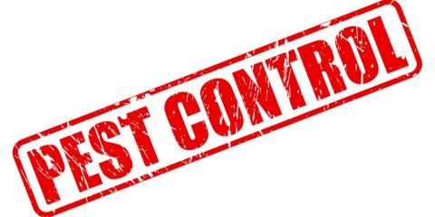 How a Pest Control Service Can Help Manage Centipedes & Ant Infestations, Wahiawa, Hawaii
