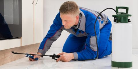 When Do You Need Professional Pest Control?, Sevierville, Tennessee