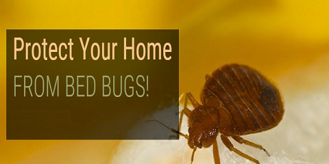Free Inspection For Bed Bugs & Other Pests by PESTerminating Systems, Queens, New York