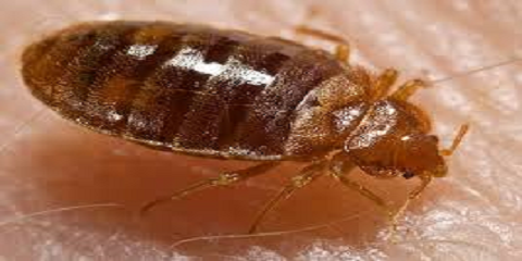 Bed Bug Removal Service & More: Remove All Biting Critters From Your Home With PESTerminating Systems, Queens, New York