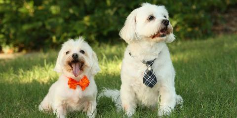 3 Pet Accessories That Will Make Your Furry Friend Stand Out, Manhattan, New York