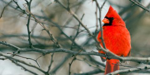How to Help Wild Birds Through the Winter, Bethel, Ohio
