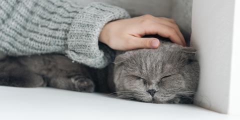 3 Ways to Keep Your Older Cat Comfortable, Clark, Missouri