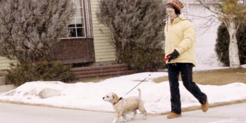 3 Wintertime Dog & Cat Care Tips From Pet Boarding Experts, Nicholasville, Kentucky