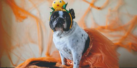 How to Dress Up Your Pets for Halloween, Newport-Fort Thomas, Kentucky